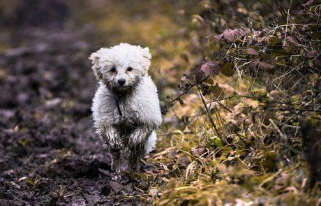 סוגי כלבים קטנים שיתאימו לכל בית