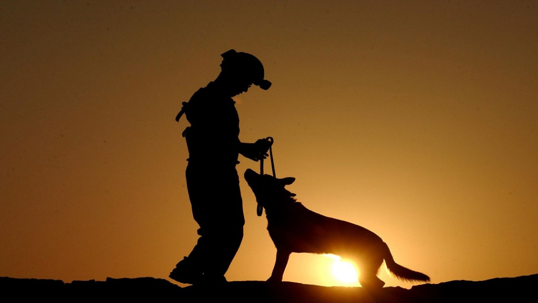 חדשות טובות: כלב העוקץ אשר דווח כי נהרג הבוקר- בחיים