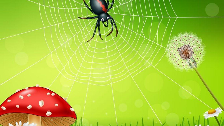 מה זה ארכנופוביה? דרכי טיפול בפחד מעכבישים