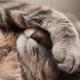 איידס חתולים – FIV