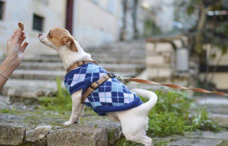 אוכל לכלבים או מזון טרי ביתי? חשוב שתדעו מה אתם נותנים לכלב שלכם