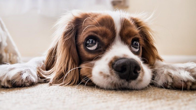 כלוב טיסה לכלב שלכם
