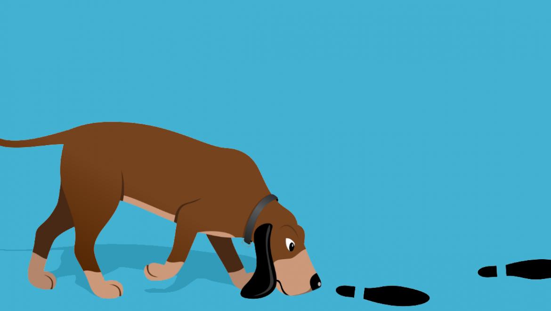 האם כלבים אכן יכולים למצוא את דרכם חזרה הביתה?
