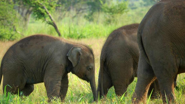 האם פילים מתאבלים?